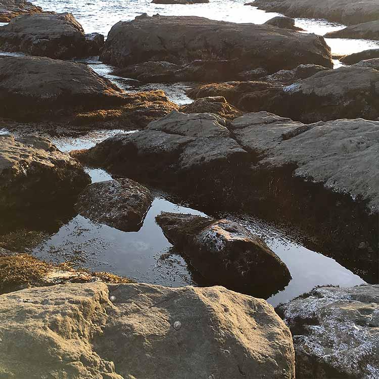 海藻とゴロタ