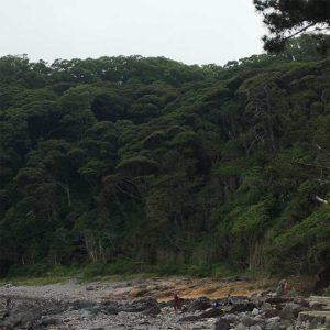 ジュラシックパークのような真鶴の森林