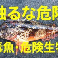 触るな危険 神奈川で釣れる毒魚・危険生物